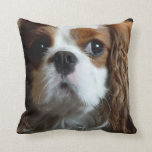 "Cavalier King Charles Spaniel cushion pillow<br><div class=""desc"">Cavalier King Charles throw cushion pillows custom design cute puppy puppies dog dogs spaniels novelty fun adorable dog closeup Christmas gifts for Cavvie Cavy Cavvy Cav dog lovers</div>"