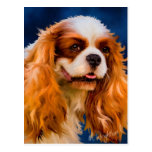 Cavalier King Charles Spaniel Dog Art - Chelsea Post Card