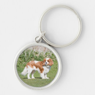 Cavalier King Charles Spaniel dog beautiful photo Keychain