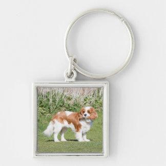 Cavalier King Charles Spaniel dog beautiful photo Keychain