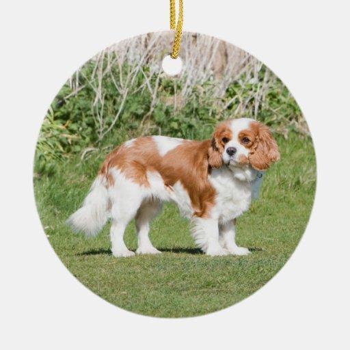 Cavalier King Charles Spaniel dog beautiful photo Christmas Tree