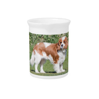 Cavalier King Charles Spaniel dog beautiful photo Drink Pitchers