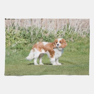 Cavalier King Charles Spaniel dog beautiful photo Towel