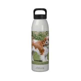 Cavalier King Charles Spaniel dog beautiful photo Drinking Bottles