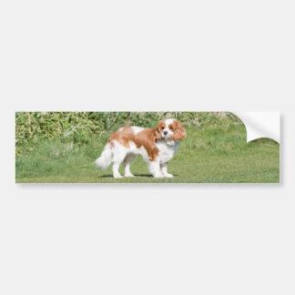 Cavalier King Charles Spaniel dog bumper sticker Car Bumper Sticker