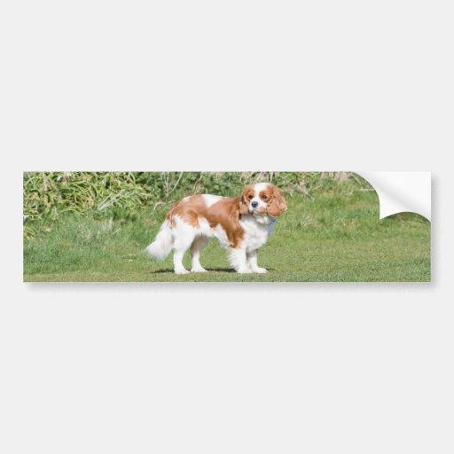 Cavalier King Charles Spaniel dog bumper sticker
