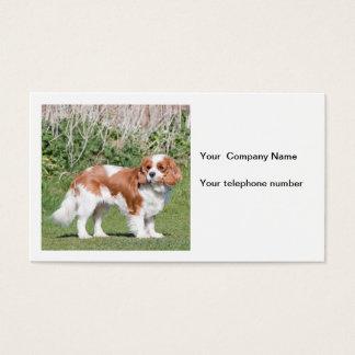 Cavalier King Charles Spaniel dog business card