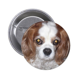 CAVALIER KING CHARLES SPANIEL DOG BUTTON