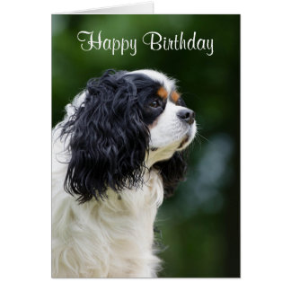 Cavalier King Charles Spaniel dog custom birthday Card