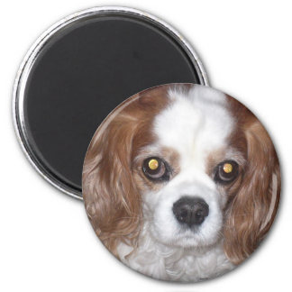 CAVALIER KING CHARLES SPANIEL DOG FACE 2 INCH ROUND MAGNET