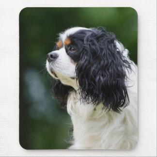 Cavalier King Charles Spaniel dog lovers mousepad