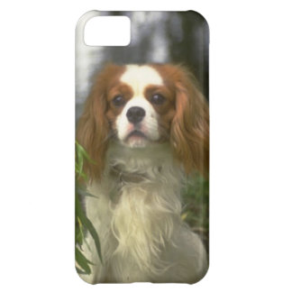 Cavalier King Charles Spaniel Dog Picture iPhone 5 Cover For iPhone 5C