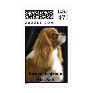 Cavalier King Charles Spaniel Dog Postage