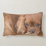 Cavalier King Charles Spaniel Eyes On You Pillow