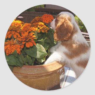 Cavalier King Charles Spaniel Flowers Classic Round Sticker
