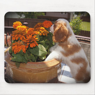 Cavalier King Charles Spaniel Flowers Mouse Pad
