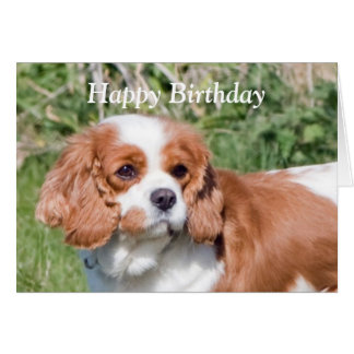 Cavalier King Charles Spaniel  happy birthday card