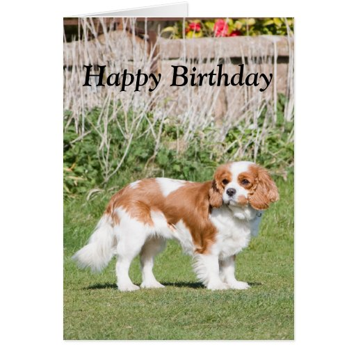 Cavalier King Charles Spaniel happy birthday card | Zazzle