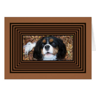 Cavalier King Charles Spaniel in fall leaves Card
