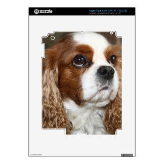 Cavalier King Charles Spaniel iPad 3 Skin