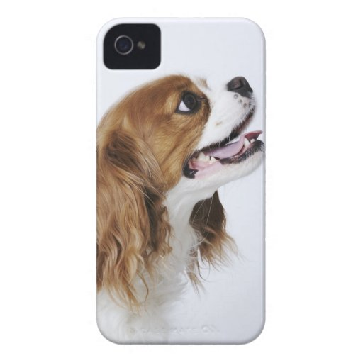 Cavalier King Charles Spaniel iPhone 4 Covers