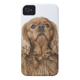 Cavalier King Charles Spaniel looking up Case-Mate iPhone 4 Case