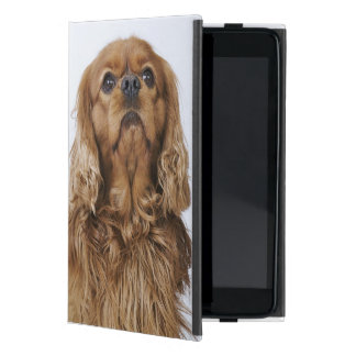 Cavalier King Charles Spaniel looking up Covers For iPad Mini