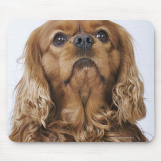 Cavalier King Charles Spaniel looking up Mouse Pad