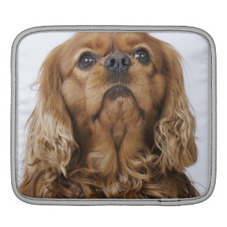 Cavalier King Charles Spaniel looking up Sleeve For iPads