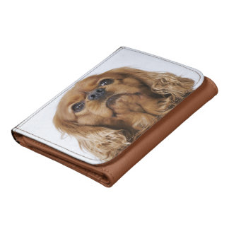 Cavalier King Charles Spaniel looking up Wallets