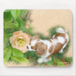Cavalier King Charles Spaniel Mousepads