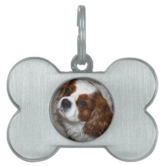 Cavalier King Charles Spaniel Pet Tag