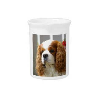 Cavalier King Charles Spaniel Portrait Drink Pitchers