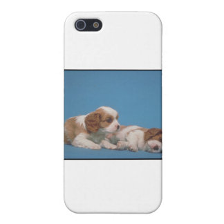 Cavalier King Charles Spaniel Puppies Case For iPhone SE/5/5s