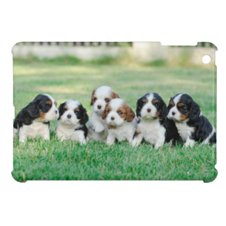 Cavalier King Charles Spaniel puppies iPad Mini Cover