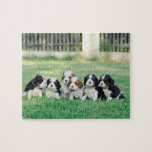 "Cavalier King Charles Spaniel puppies Jigsaw Puzzle<br><div class=""desc"">Six Cavalier King Charles Spaniel puppies</div>"