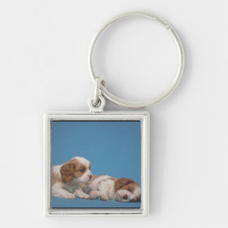 Cavalier King Charles Spaniel Puppies Key Chains