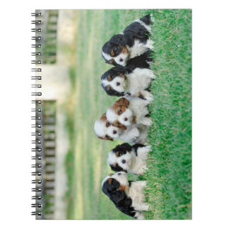 Cavalier King Charles Spaniel puppies Notebook