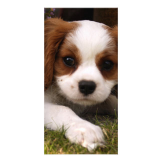 Cavalier King Charles Spaniel Puppy behind flowers Card