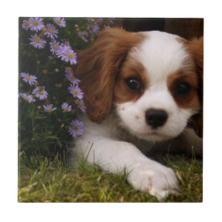 Cavalier King Charles Spaniel Puppy behind flowers Ceramic Tile
