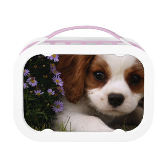 Cavalier King Charles Spaniel Puppy behind flowers Lunch Box