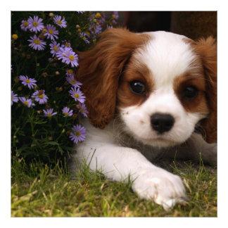 Cavalier King Charles Spaniel Puppy behind flowers Photo
