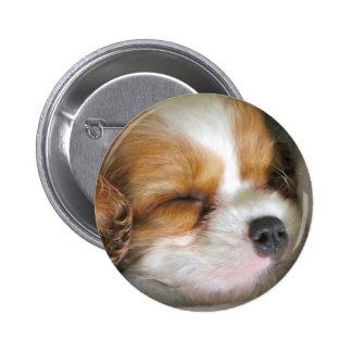 Cavalier King Charles Spaniel Puppy Button Badge