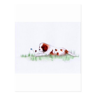 Cavalier King Charles Spaniel  puppy CKC Postcard