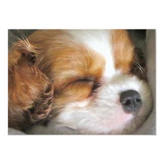 Cavalier King Charles Spaniel Puppy Invitation