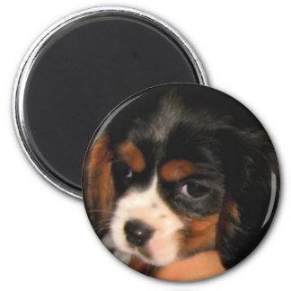 Cavalier King Charles Spaniel Puppy Magnet
