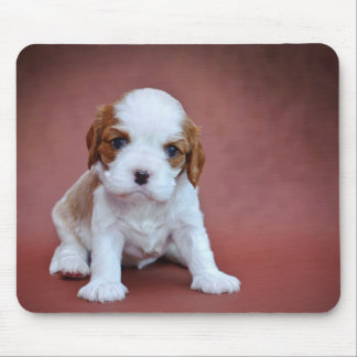 Cavalier King Charles Spaniel puppy Mouse Pad