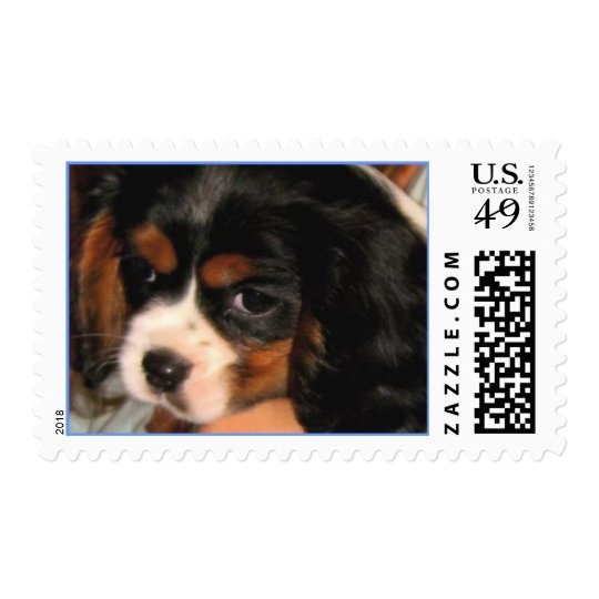 Cavalier King Charles Spaniel Puppy Postage
