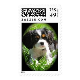 Cavalier King Charles Spaniel Puppy Stamp