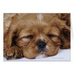 Cavalier King Charles Spaniel puppy sleeping Card